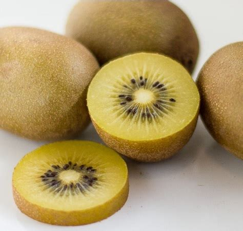Bibit Buah Kiwi Golden bibit kiwi golden bibitbunga