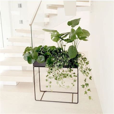 Planter Box Plants by 25 Best Ideas About Plant Box On Wood Flower