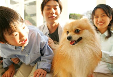 pomeranian family breed pictures the right for you your health