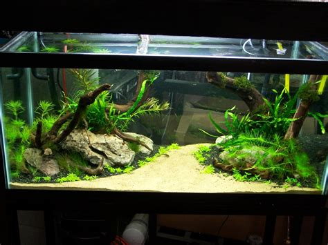 aquarium design techniques 10 tips on how to make a fish tank junk mail blog