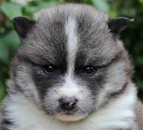 designer breeds designer dogs list of designer breeds info and images hybrid dogs