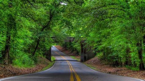 road trees bridge landscape tree forest  wallpaper