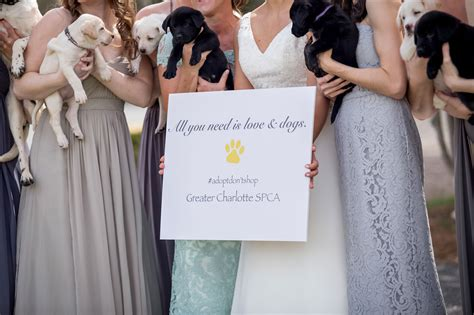 puppy bouquet wedding uses puppies in place of bouquets for bridal photos