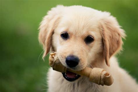 best bones for puppies top 10 best bones for dogs to chew on in 2018