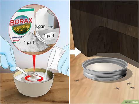 come sterminare le formiche in casa come eliminare le formiche 10 passaggi illustrato
