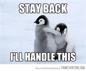Cute Penguin Meme - have a laugh baby penguin takes charge saboteur365
