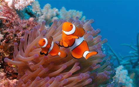 hewan lucu  animasi bergerak pemandangan bawah laut
