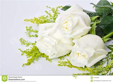 imagenes tres rosas tres rosas blancas imagen de archivo libre de regal 237 as