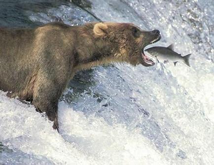Prey Of The Predator predator and prey relationship www pixshark images