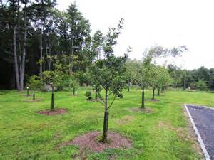 Backyard Orchard Design Fruit Tree Orchard And Berry Patch Installation Natural