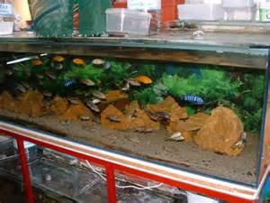 entretien d aquarium eau douce divers aquarium