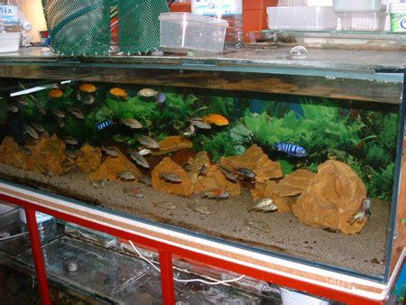 Comment Nettoyer Les Decors D Aquarium by Entretien D Aquarium Eau Douce Divers Aquarium