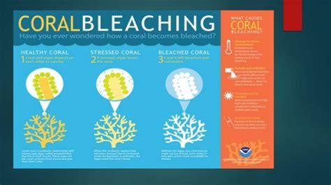 coral bleaching diagram coral reefs