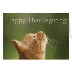 happy thanksgiving cats orange tabby cat happy thanksgiving card zazzle