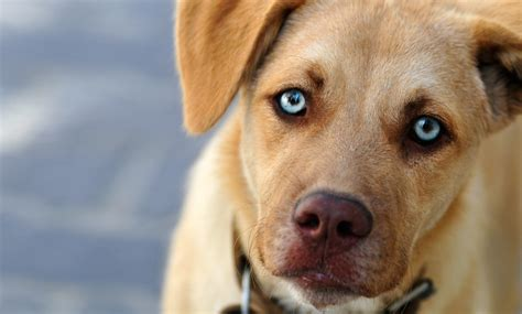 are dogs color blind and how they see the world