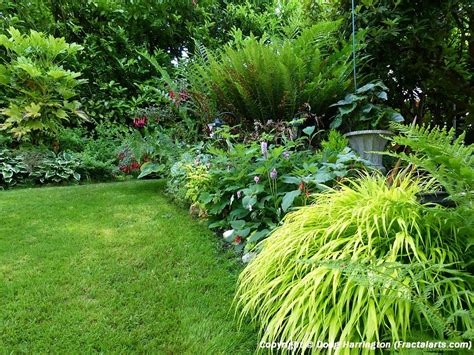 best plants for shade with lights light shade border plants in my garden my garden pacific nw plants border