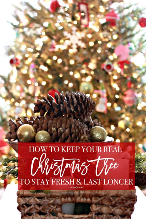 how to keep your real christmas tree to stay fresh and