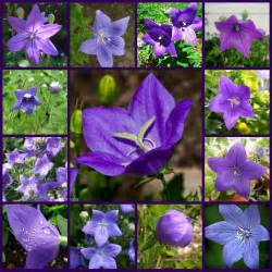 purple flowers types of purple flowers names of purple