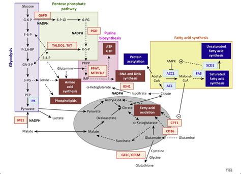 j protein chem impact factor the nrf2 regulatory network provides an interface between