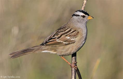 northwestbirding com birds