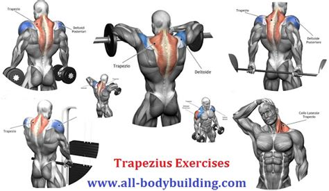 killer traps tips for impressive traps all