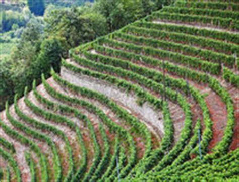 terrazzamenti in collina terrazzamento per coltivazione della vite in una collina