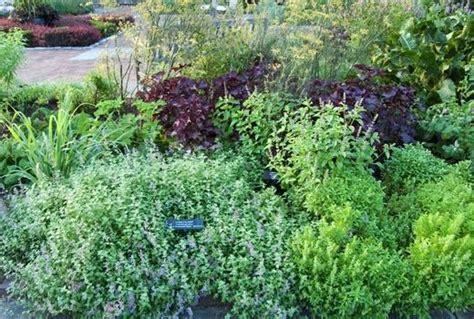 planting an herb garden growing an herb garden gardening delights pinterest