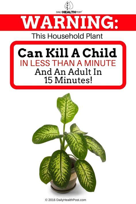 household plant  toxic  children  pets