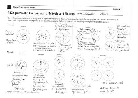 printable mitosis quiz worksheet 3 9 mitosis sequencing answer key worksheets