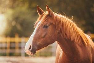 the clinical practice of equine assisted therapy including horses in human healthcare books equine therapy therapy for addiction treatment