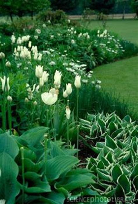 9 best images about green and white garden on