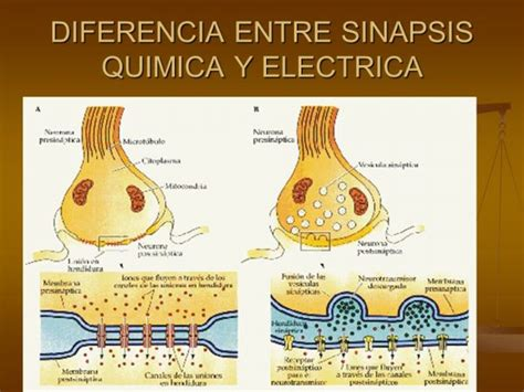 qu 233 busca el ma 237 z m 225 s all 225 de s 243 lo un alimento diferencia entre imagenes jpg y bmp diferencias entre sinapsis el 233 ctrica y qu 237 mica