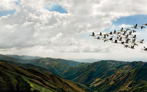 green wallpaper the range birds flying over iberian mountain range full hd wallpaper