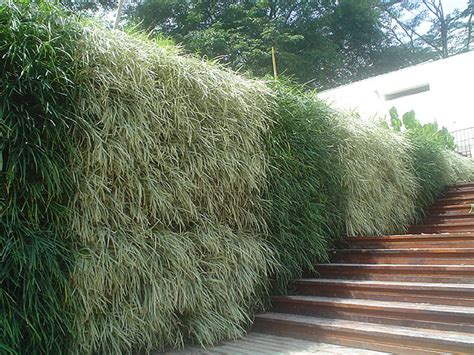 Vertical Gardens South Africa Landscaping Service Vertical Plantscapes Living Walls