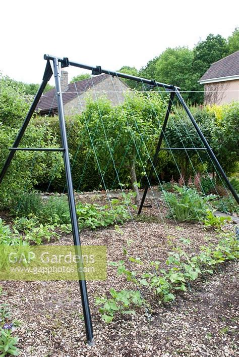 swing support frame gap gardens old swing frame used as a support for young