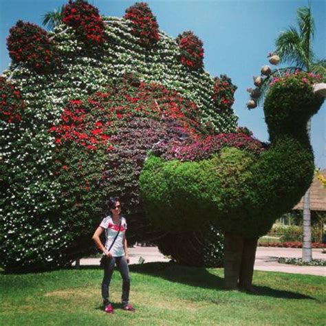 imagenes de jardines botanicos en mexico foto de jardines de m 233 xico jojutla jardines de m 233 xico