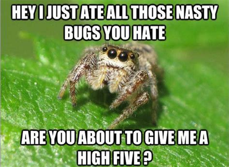 Funny Spider Meme - nobody understands spiders the meta picture