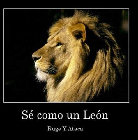imagenes de leones con frases imagui imagenes de leones con mensajes bonitos para compartir