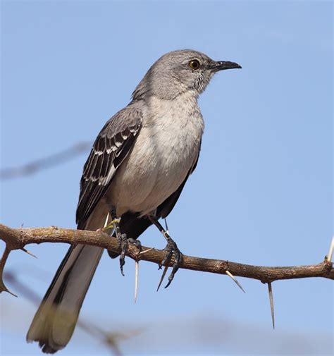 bird list pictures and information feedage 22446356