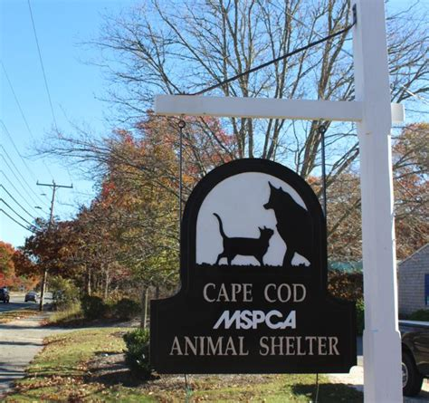 mspca plans new cape cod shelter a rescue story cape - Cape Cod Animal Shelter