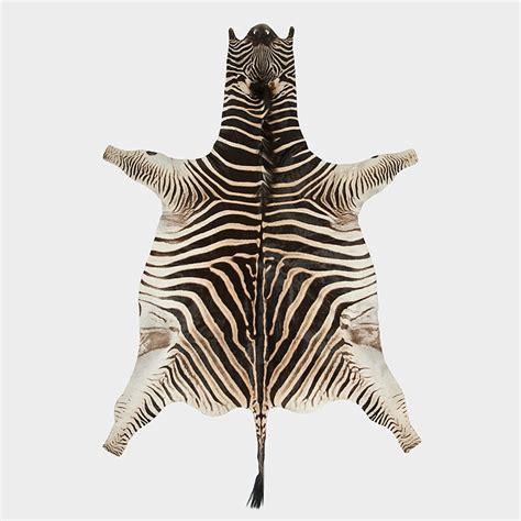 what color is a zebra s skin zebra skins gameskin pty ltd