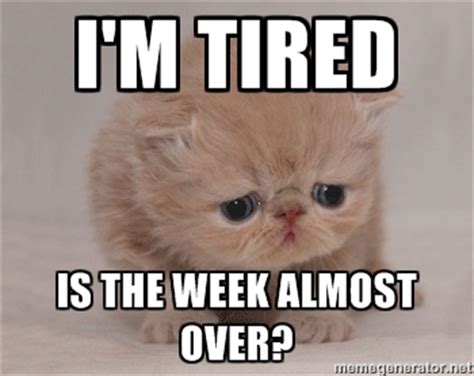 Im Tired Meme - sleepy cat meme generator image memes at relatably com