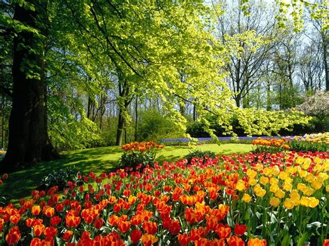 A Garden Of Flowers Flowers For Flower Flowers Sceneries Wallpapers