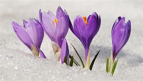 piante fioriscono in inverno quali sono le piante fioriscono in inverno