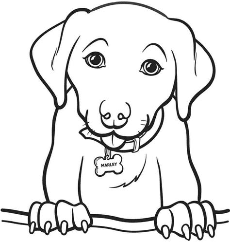 free animal coloring pages for toddlers printable animal dogs coloring sheets for kids girls 8611