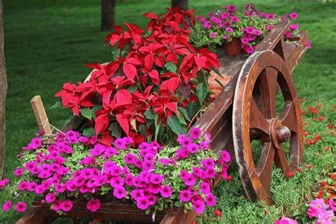 colori dei fiori colore dei fiori linguaggio dei colori dei fiori