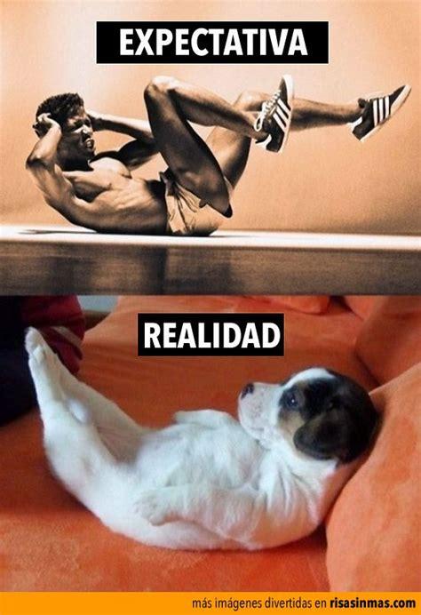 imagenes fitness graciosas 17 mejores ideas sobre fotos de perros graciosas en