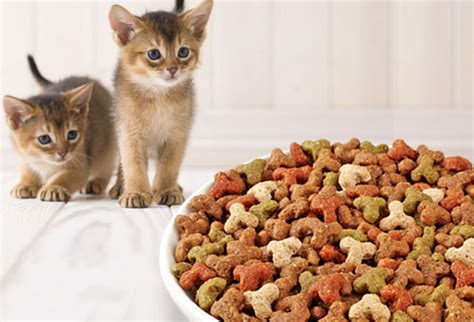 Standing Bowl Tempat Makanan Kucing kitten care pictures from adoptions to proofing your home