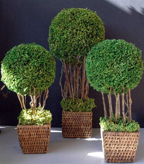 definition topiary bring on the topiary designer ideas