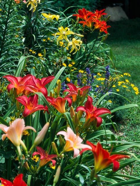 full sun flower beds a gallery of top daylilies